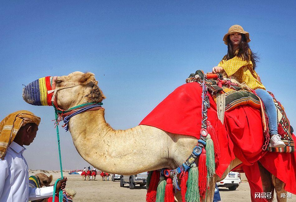 卡塔尔人周末怎么嗨?冲沙、放隼、骑骆驼